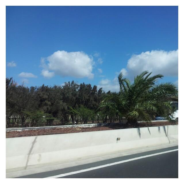 Sista exotiska bilden från Gran Canaria, på väg till flygplatsen för hemresan