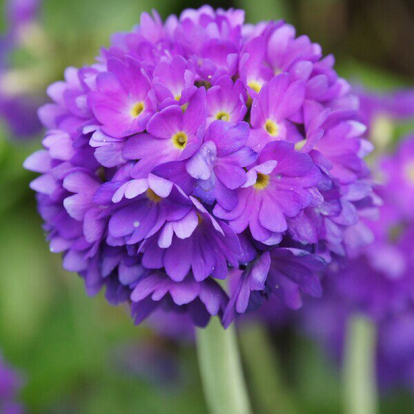 Blomsterfotografering i Mörarp