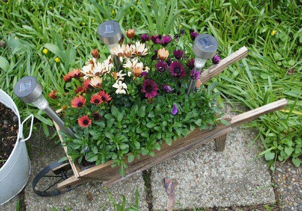 Rullebör, skottkära i trä med blomsterplantering