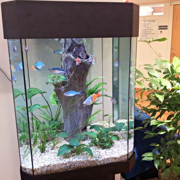 Akvariumet i väntrummet på Påarps läkarstation/vårdcentral