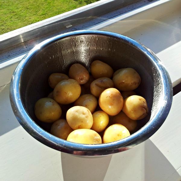 Rentvättad svensk färskpotatis i olja, vitpeppar och salt redo för rostning