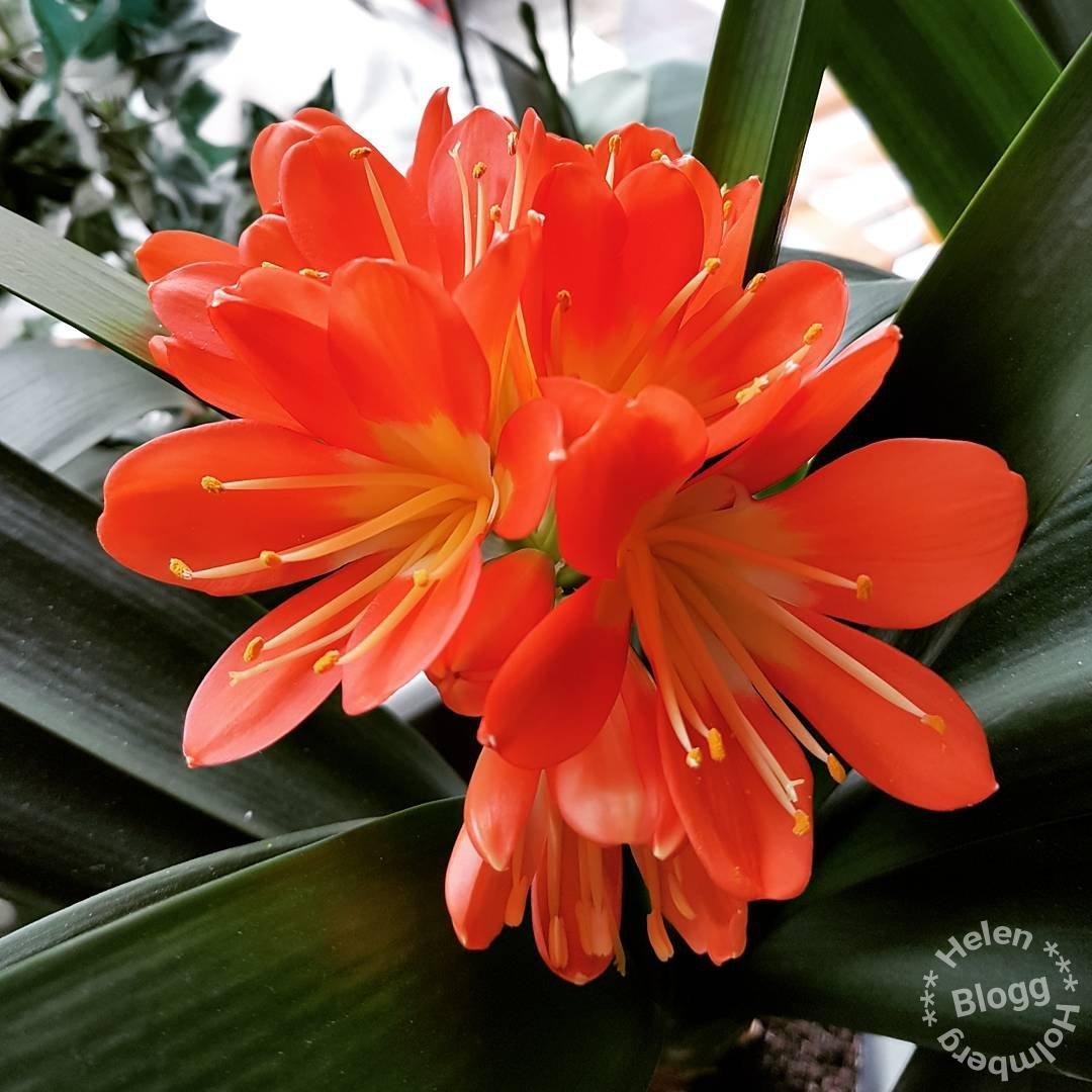 Mammas fina blomma som blommar