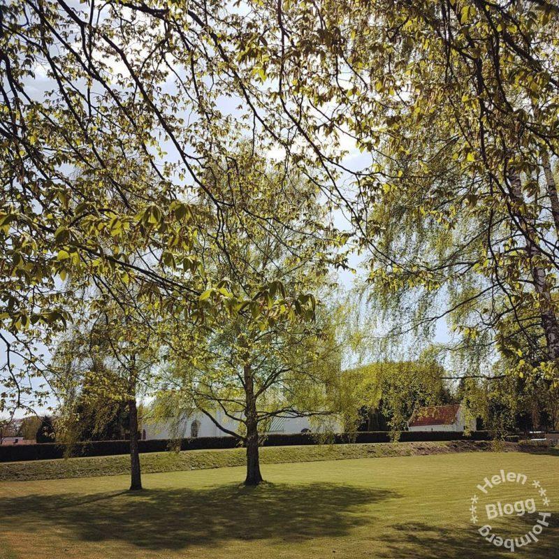 Grönskande träd utanför Mörarps kyrka